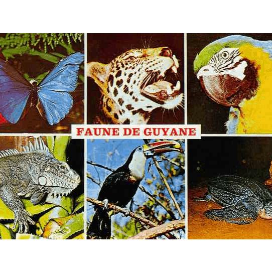 Agressions par la faune en Guyane Française